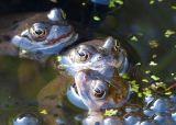 Springtime Froggie Frolics