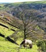 Pony in Valley