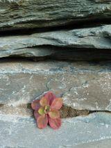 Pink Alpine and Slate