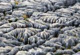 Myriad of Limestone Shapes