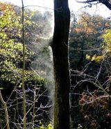 Steaming Tree!