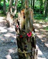 Shelled Tree Stumps