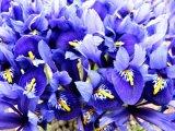 Vivid Alpine Colours