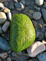 'Greenypig' rock on Allonby beach