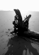 Driftwood Silhouette