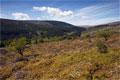Mynydd Du Forest