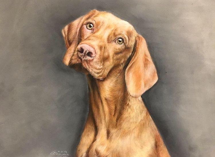 Dog, vizsla, Hungarian vizsla, pet, pet portrait