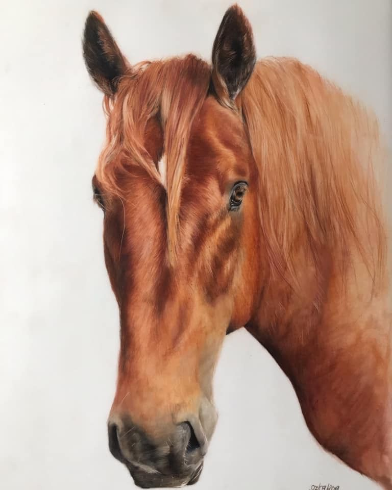 Suffolk punch society, Suffolk punch, horse, draft horse, heavy horse, equine, equine art, horse art, drawing, coloured pencils, pet portrait
