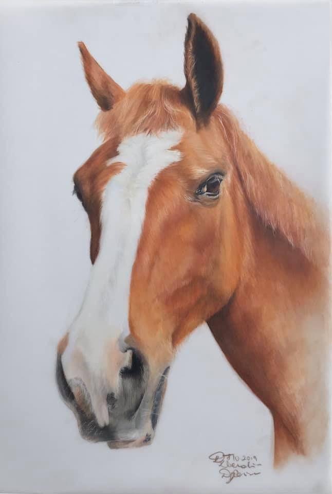 horse, equine, pet, pet portrait, horse drawing, equine art, fine art, coloured pencil, horse portrait