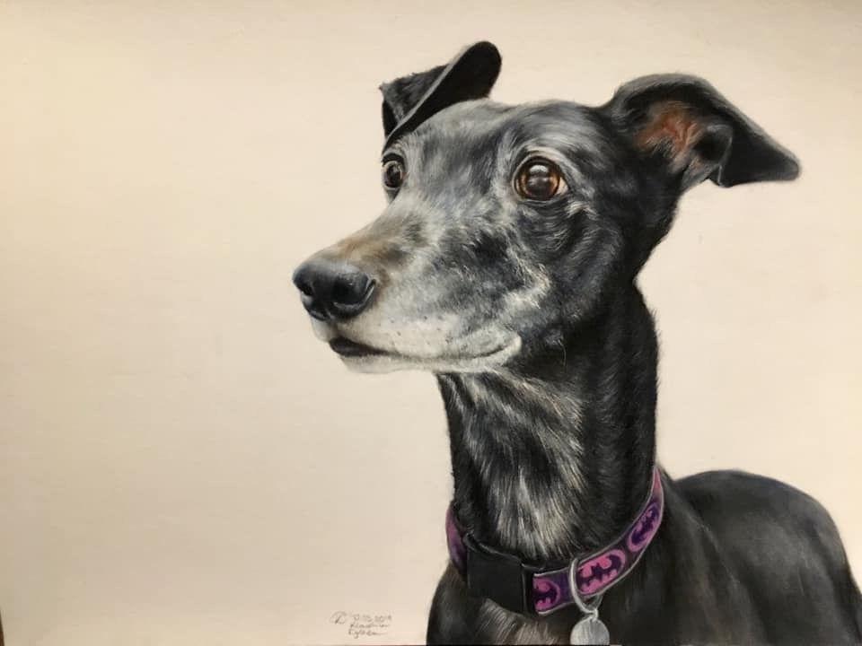 Greyhound, whippet, dog, dog portrait, pet portrait, greyhound racing