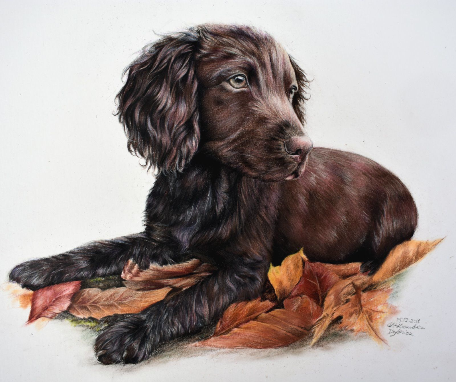 Spaniel Laying in Leaves