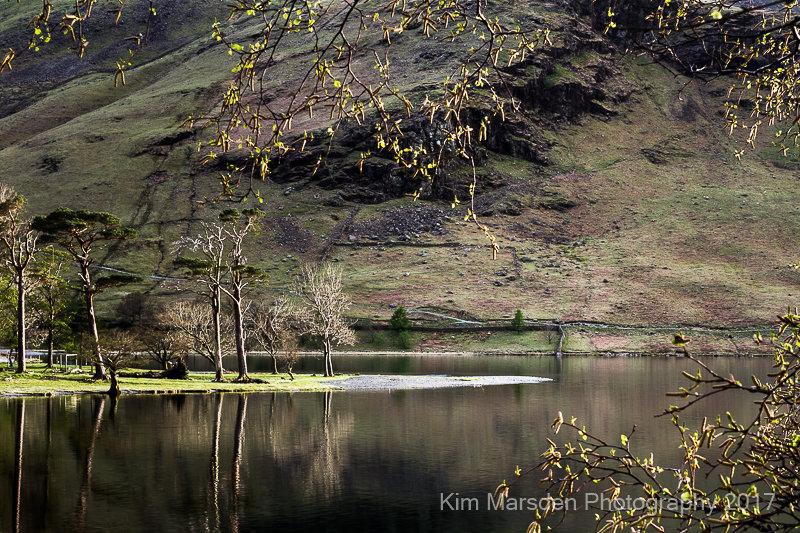 Buttermere trees at sunset landscape