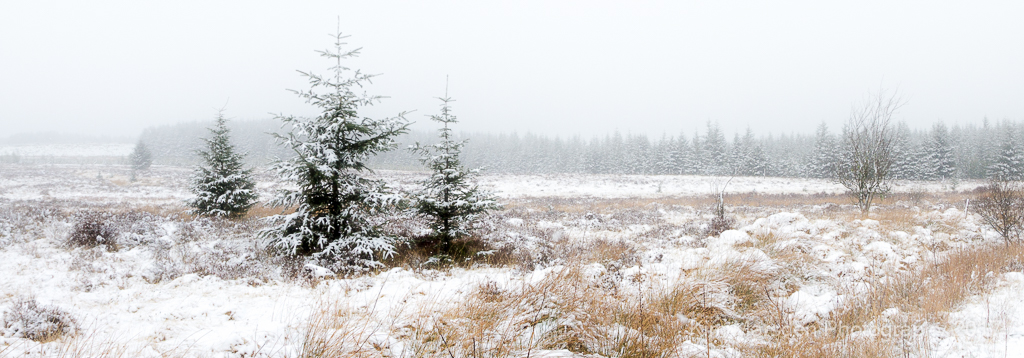 Galloway Forest in mist & snow
