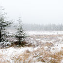 Galloway Forest in mist & snow