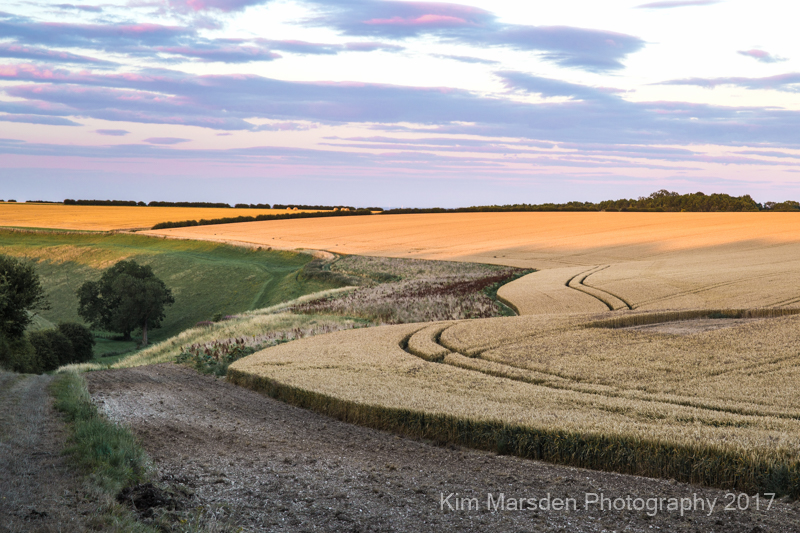 Late evening light over Yorkshire Wolds near Huggate