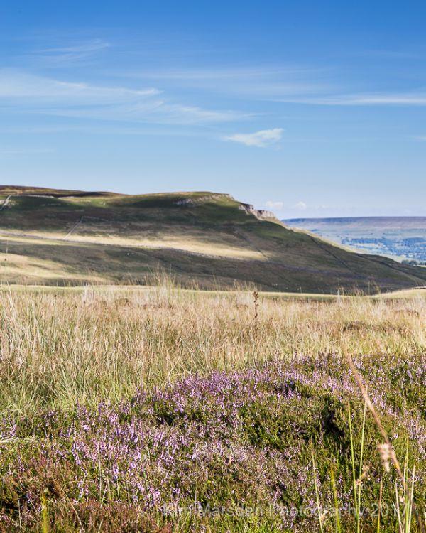 Yorkshire Dales heather looking towards Ellerkin Scar
