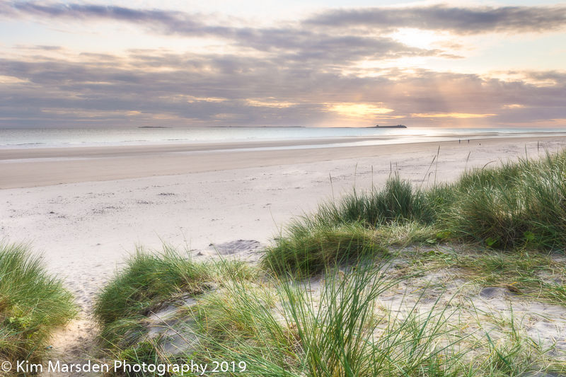 Farne island dawn