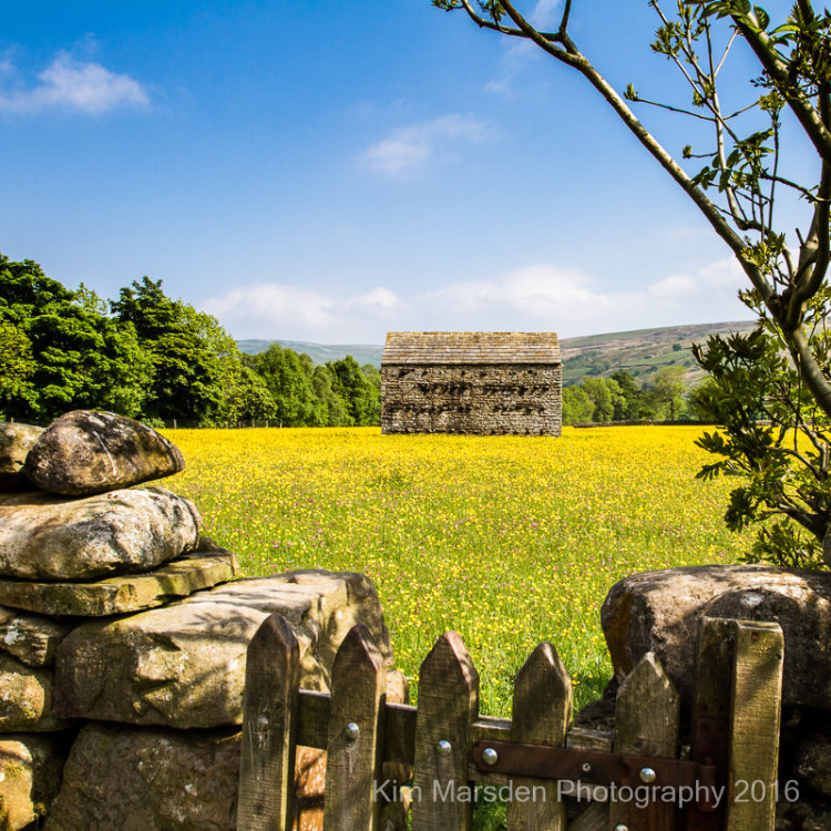 Wildflower meadow & Dales Barn - Muker - Swaledale
