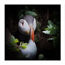 Puffin triptych 1