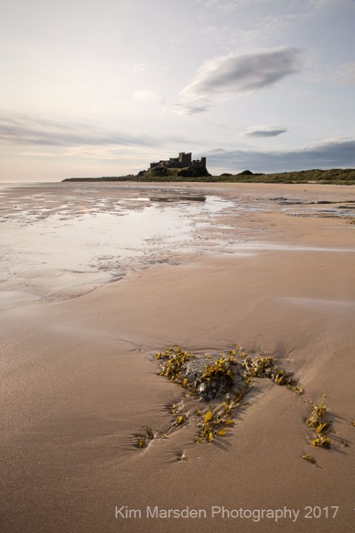 Bamburgh Castle & seaweed in early morning light