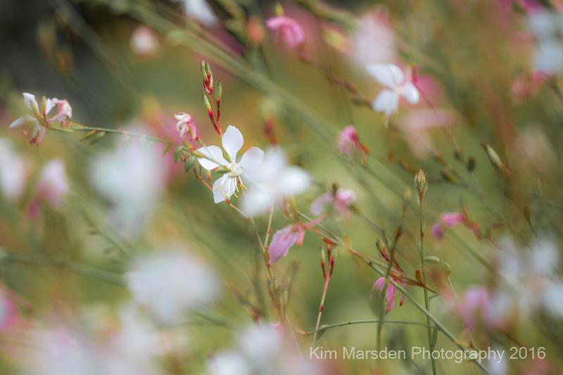 Flora - RHS Rosemoor1