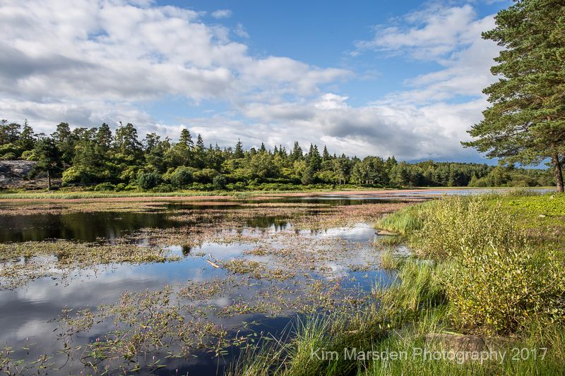 Cragside lake reflections