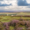 Late summer colour on the North York Moors