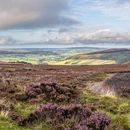 Late summer colour on the North York Moors Panorama