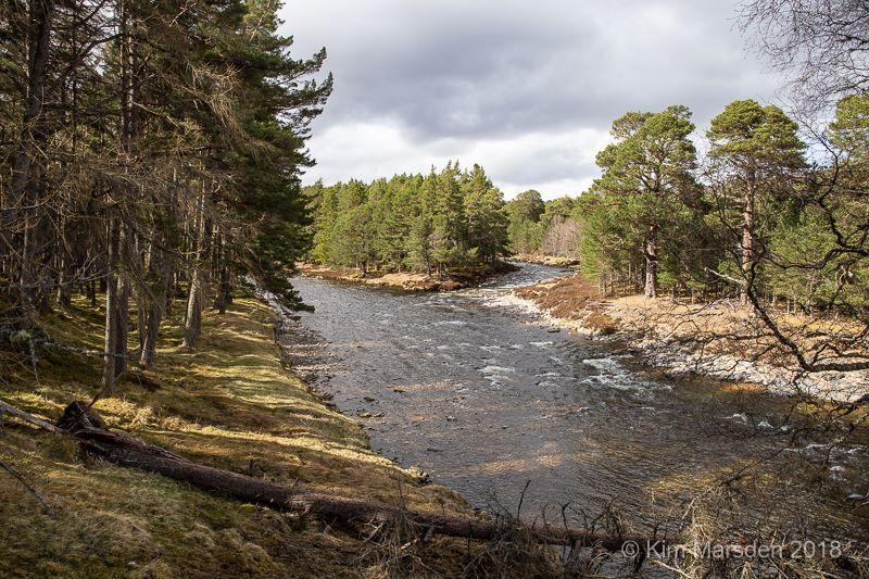 River Dee - May Lodge Estate
