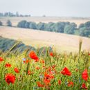 Small Group Floral & Landscape Workshop - Full Day - Burnby Hall & Yorkshire Wolds