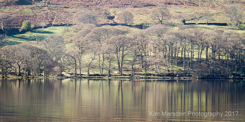 Tree reflections, Howtown, Ullswater