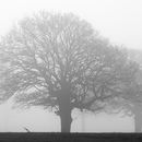 Misty trees across the River Ouse