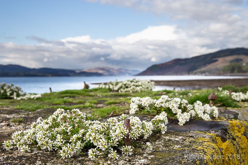 Otter Ferry, Loch Fyne, Scotland