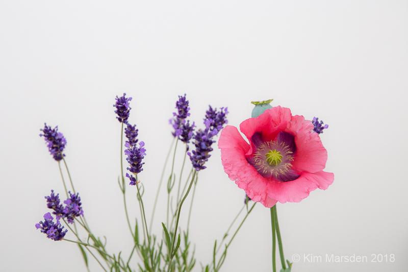 Lavender & poppy
