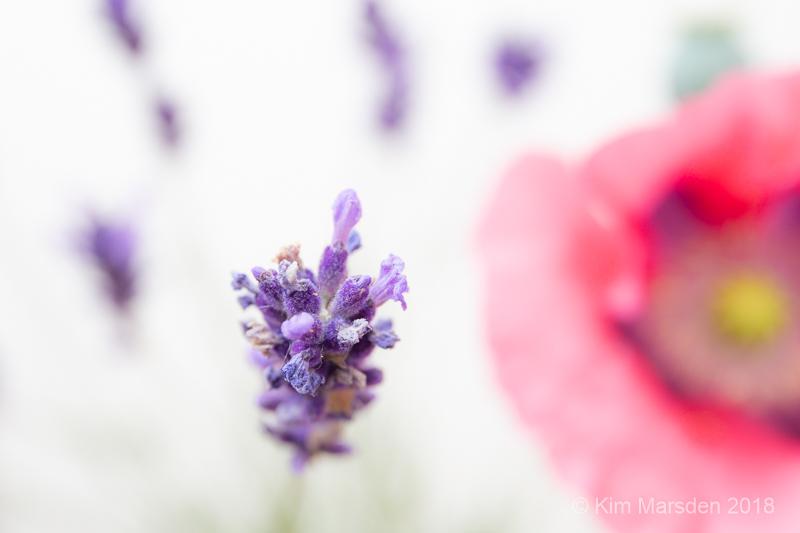 Poppy & Lavender detail