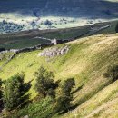 Swaledale in early evening light