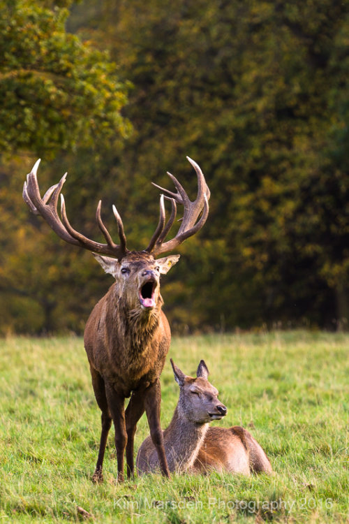 Oh do stop shouting deer!!!