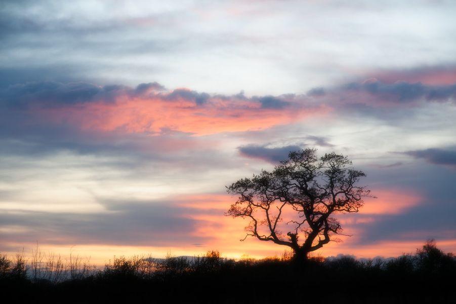 Askham Tree at sunset