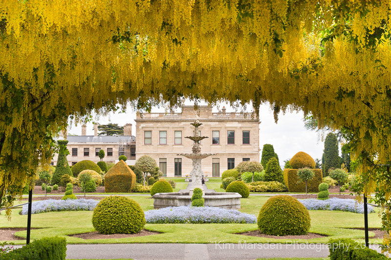 Brodsworth Hall & garden looking through the laburnum arch