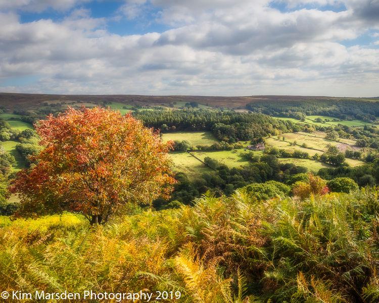 Autumn in Farndale