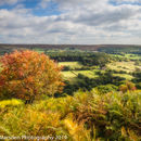 Autumn in Farndale