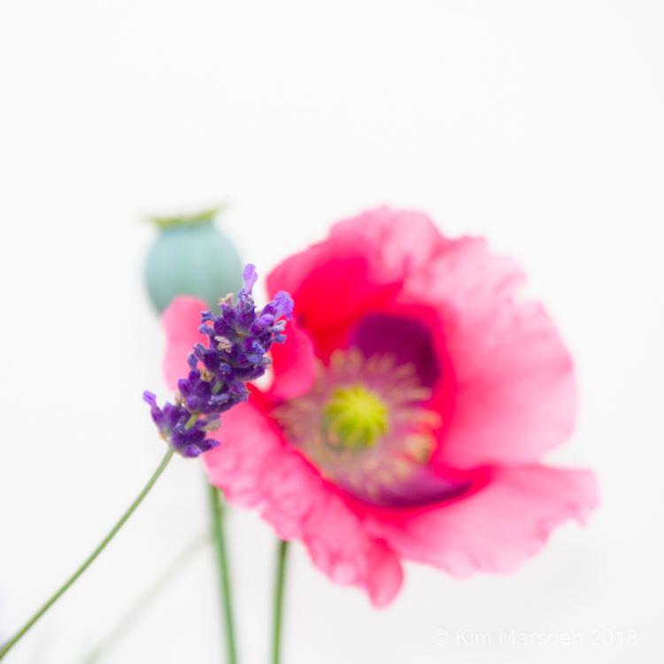 Lavender, poppy & seed head