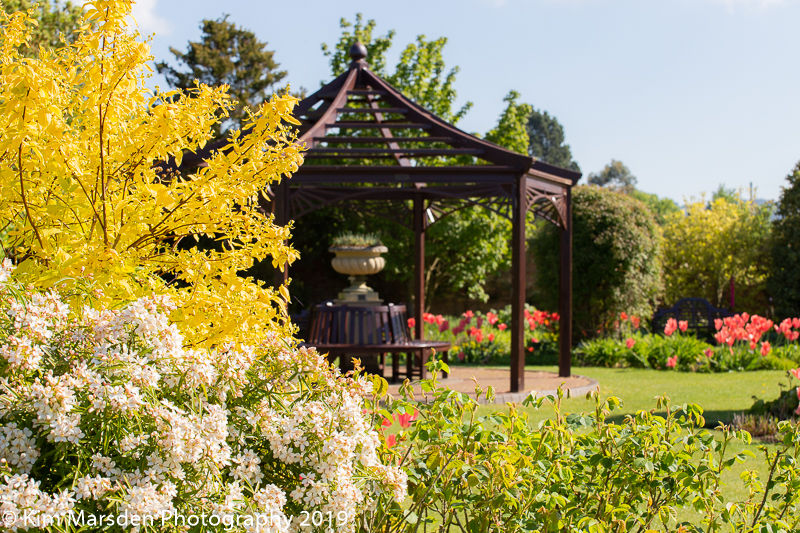 Spring Flowers at Burnby Hall