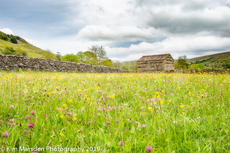 Wildflower meadow Muker in the Yorkshire Dales