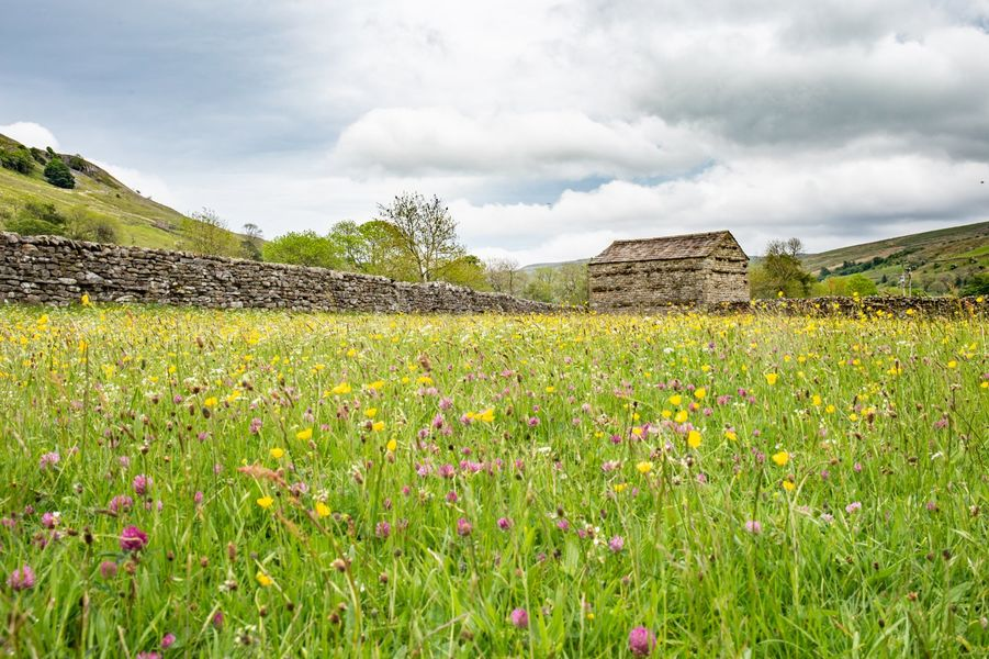 Small Group Landscape Workshop - Full Day - Yorkshire Dales