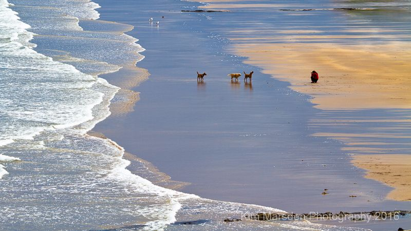 Cocklawburn Beach - Northumberland