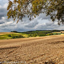 Wolds fields