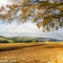 Yorkshire Wolds fields