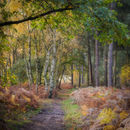 An autumnal walk in the woods