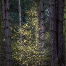 Dreamy sparkles